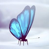 butterfly2507