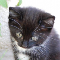 Knitted_Kitten